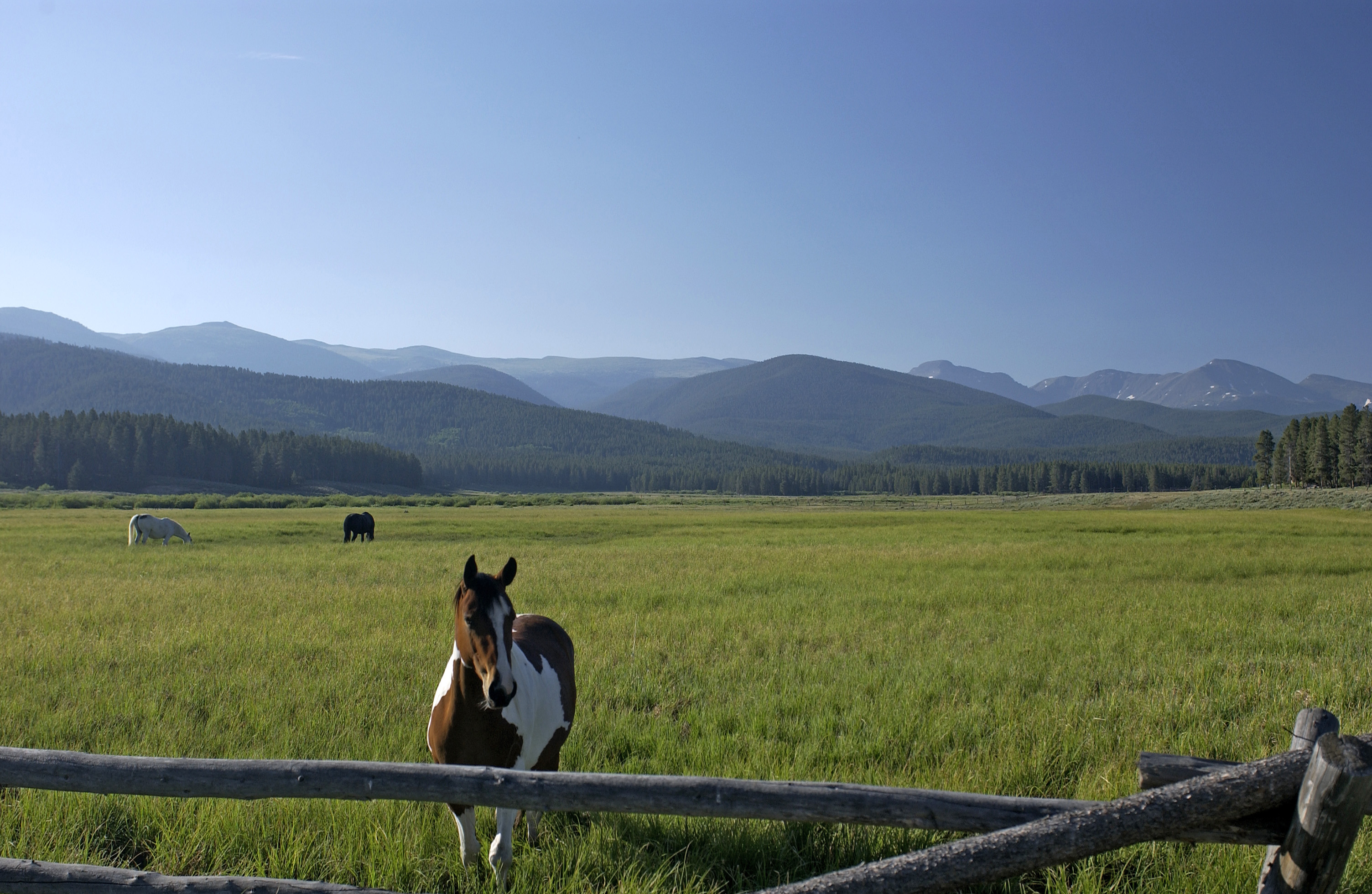 Horses in Meadow at Devil's Thumb Ranch